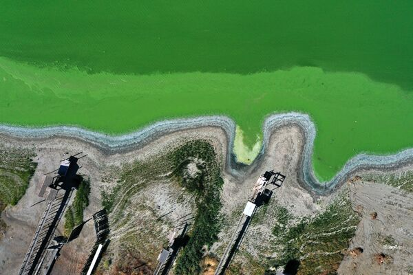 Ciānobaktēriju ziedēšana ezerā Redbada parkā - Sputnik Latvija