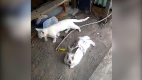 Кролик спасает котенка из запертого сарая - видео - Sputnik Латвия