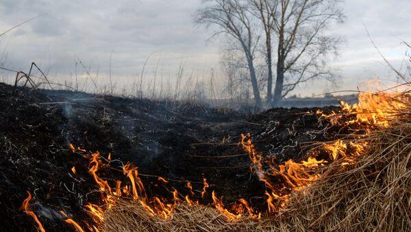Горение сухой травы - Sputnik Латвия