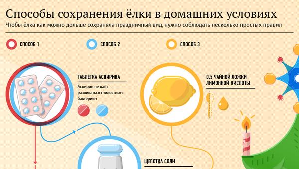 Способы сохранить ёлку в домашних условиях - Sputnik Латвия