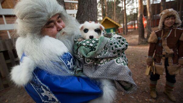 Ямал Ири из Салехарда несет щенка в подарок Деду Морозу во время празднования Дня рождения Деда Мороза в Великом Устюге - Sputnik Латвия