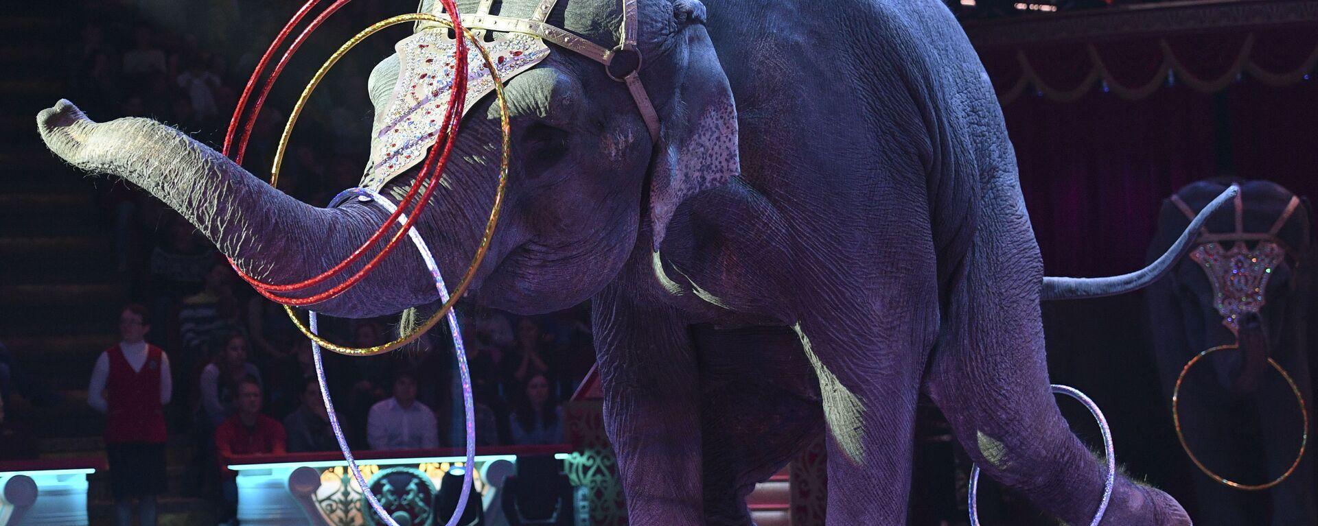 Премьера новой программы Браво в Московском цирке Никулина - Sputnik Латвия, 1920, 06.09.2021