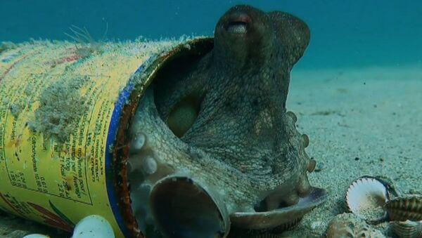 Осьминоги прячутся в пивных бутылках на дне моря - видео - Sputnik Латвия