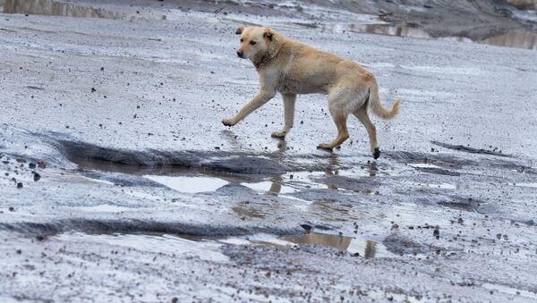 Ямы и рытвины на разбитом дорожном покрытии - Sputnik Latvija