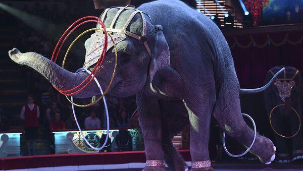 Слон во время циркового номера - Sputnik Латвия