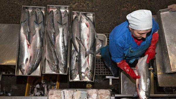 Сотрудник фабрики укладывает лосось в противни для заморозки - Sputnik Латвия