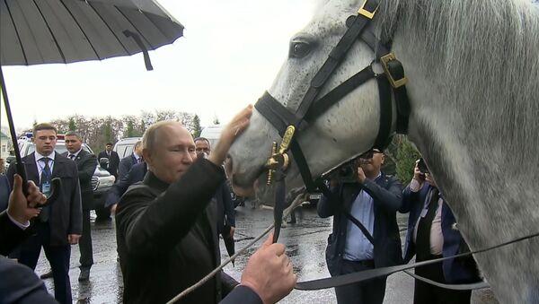 Жээнбеков подарил Путину орловского скакуна и щенка тайгана - Sputnik Латвия