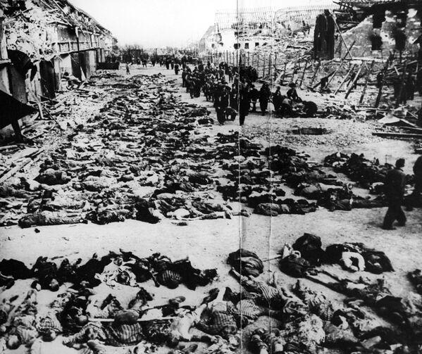 Расстрелянные в срочном порядке 2000 узников фашисткого концлагеря Клоога на территории оккупированной Эстонии во время Великой Отечественной войны, 1944 год - Sputnik Латвия