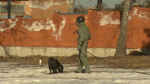 Российские саперы с собаками разминировали поле перед отправкой в Пальмиру - Sputnik Латвия