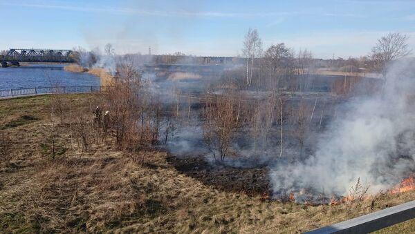На выезде из Риги горит старник - Sputnik Latvija