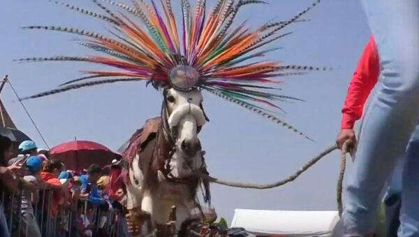 День трудолюбивых осликов отпраздновали в Мексике  - Sputnik Латвия
