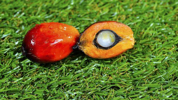 Плоды масличной пальмы - Sputnik Латвия
