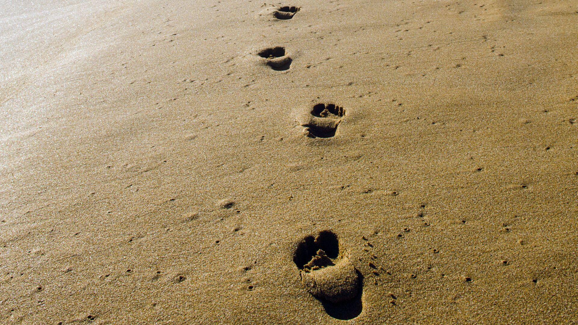 Следы на песке - Sputnik Латвия, 1920, 05.05.2021