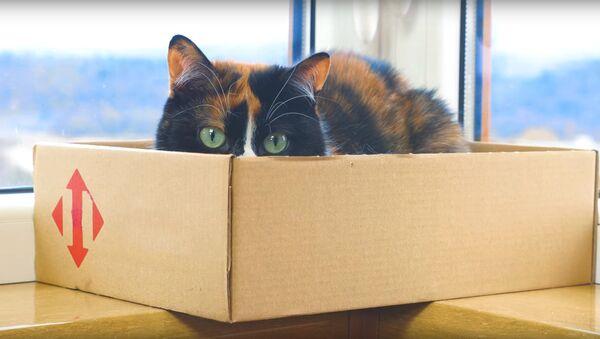 Правильный хозяин - счастливый кот - Sputnik Латвия