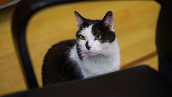 Рижский кот Мурис - Sputnik Latvija