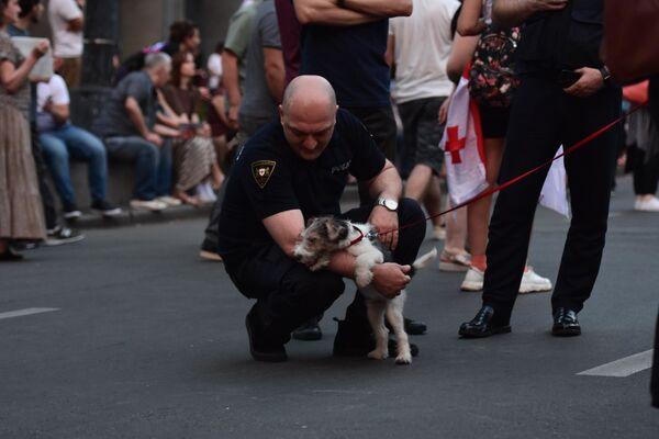 Некоторые привели домашних животных, с ними играли митингующие и полицейские - Sputnik Латвия