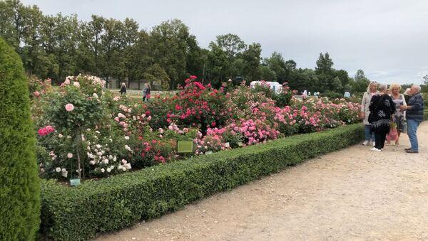 Розы и барокко: праздник сада в Рундальском дворце - Sputnik Латвия