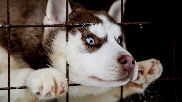 Собака - Sputnik Latvija