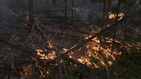 Пожар в лесу - Sputnik Латвия