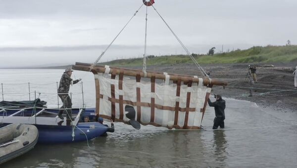 Последних косаток и группу белух из китовой тюрьмы выпустили на волю - Sputnik Латвия