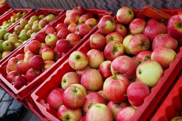 Урожай яблок в Латвии, как видно, не пострадал - Sputnik Латвия