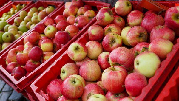 Урожай яблок в Латвии, как видно, не пострадал - Sputnik Latvija