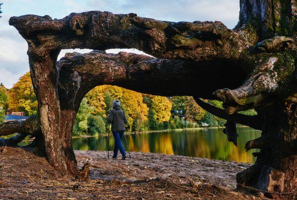 Женщина занимается скандинавской ходьбой около Суздальского озера в Санкт-Петербурге - Sputnik Латвия
