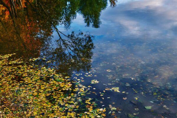 Отражение в воде на Суздальских озерах в Санкт-Петербурге - Sputnik Латвия