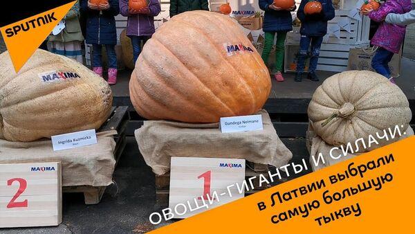 Овощи-гиганты и силачи: в Латвии выбрали самую большую тыкву  - Sputnik Латвия