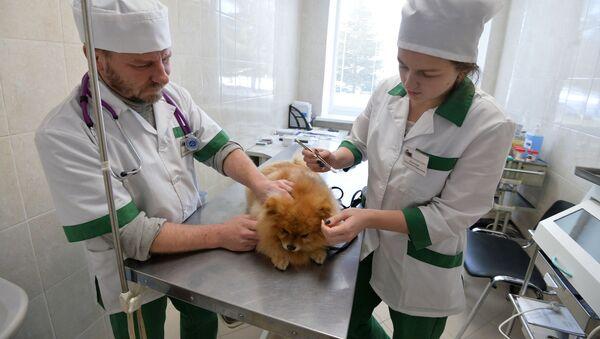 Челябинская ветеринарная станция - Sputnik Latvija