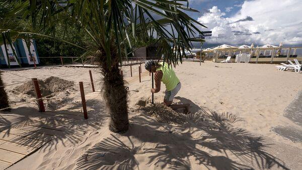 Пальма на берегу в Юрмале - Sputnik Латвия