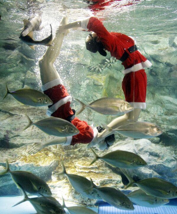 Дайверы в костюмах Санта-Клауса во время выступления в аквариуме в Сеуле  - Sputnik Латвия