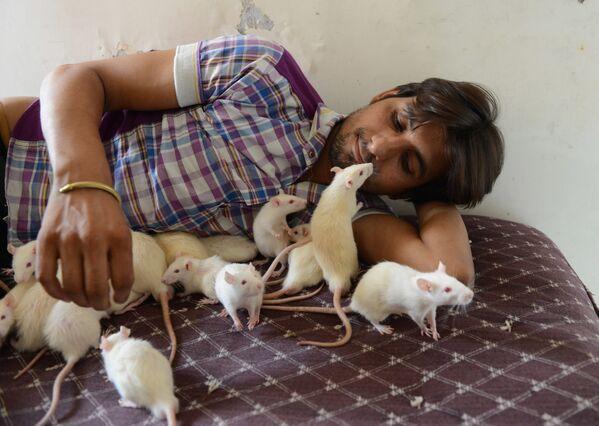 Индиец по прозвищу Рэтмэн со своими питомцами - 50-ю крысами - Sputnik Латвия