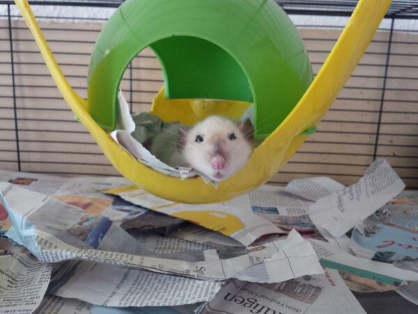 Крыса в домике - Sputnik Латвия