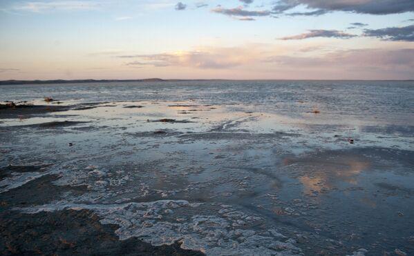 Природный биосферный заповедник Даурский в Забайкальском крае - Sputnik Латвия
