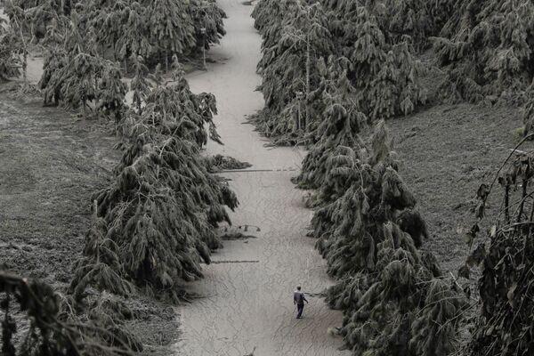 Дорога, по которой текли реки пепла - Sputnik Латвия