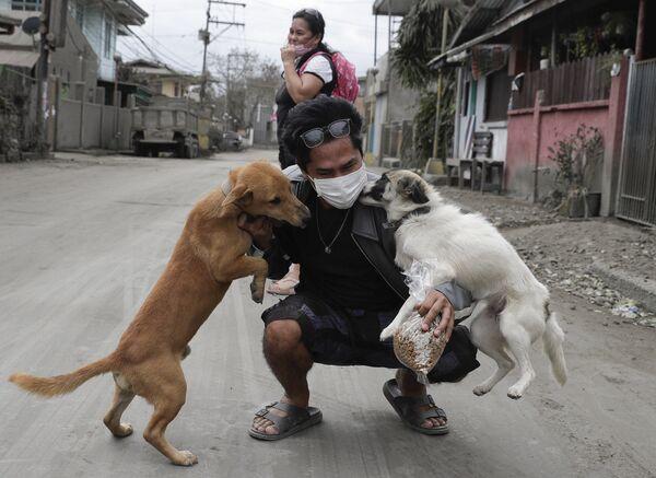 Собаки радостно встречают своего хозяина в Талисае - Sputnik Латвия