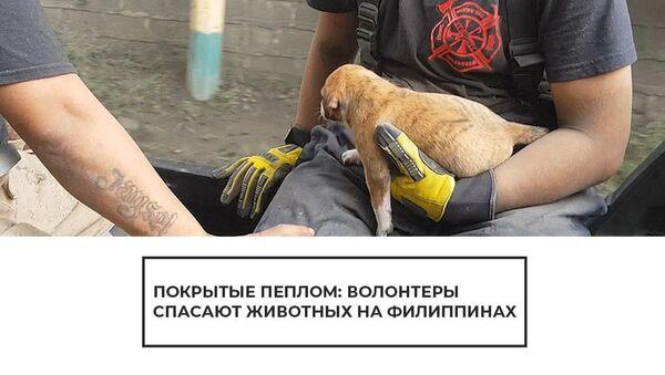 Извержение вулкана на Филиппинах: волонтеры пытаются найти выживших животных - Sputnik Латвия