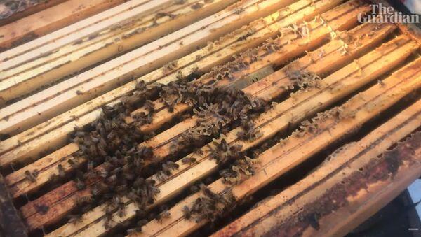 Через семь месяцев после пожара пчелиные семейства Нотр-Дам стали здоровее, чем когда-либо - Sputnik Латвия