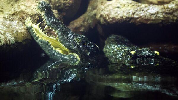 Сиамские крокодилы - Sputnik Latvija