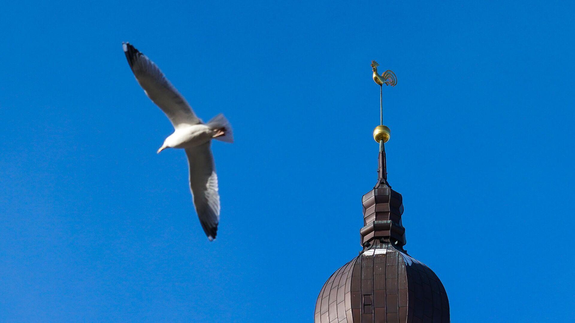 Чайка у шпиля Домского собора - Sputnik Латвия, 1920, 03.06.2021