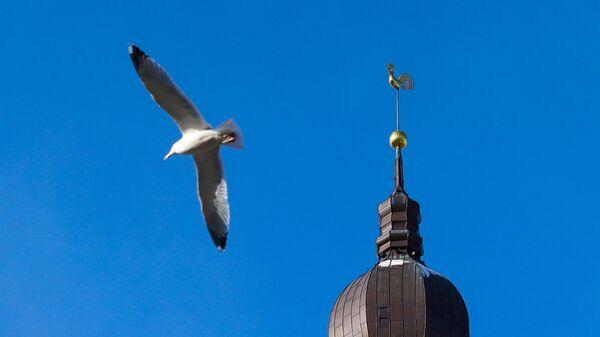 Чайка у шпиля Домского собора - Sputnik Латвия