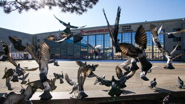Голуби у здания железнодорожного вокзала в Риге - Sputnik Латвия