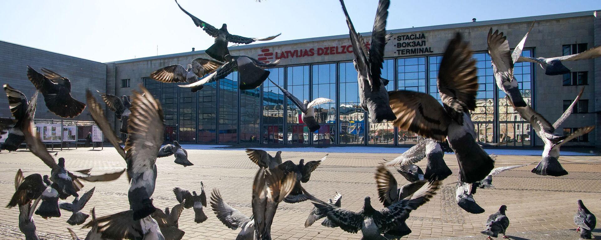 Голуби у здания железнодорожного вокзала в Риге - Sputnik Латвия, 1920, 29.07.2020