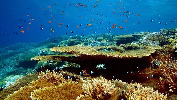 Коралловый риф в Красном море на территории Национального заповедника Набк - Sputnik Латвия