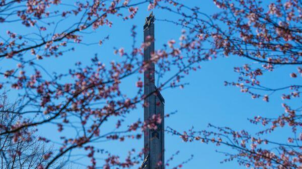 В Парке Победы в Риге цветет сакура - Sputnik Latvija
