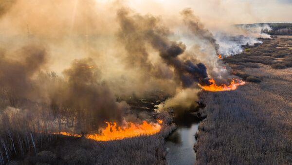 Пожар в зоне отчуждения Чернобыльской АЭС - Sputnik Латвия