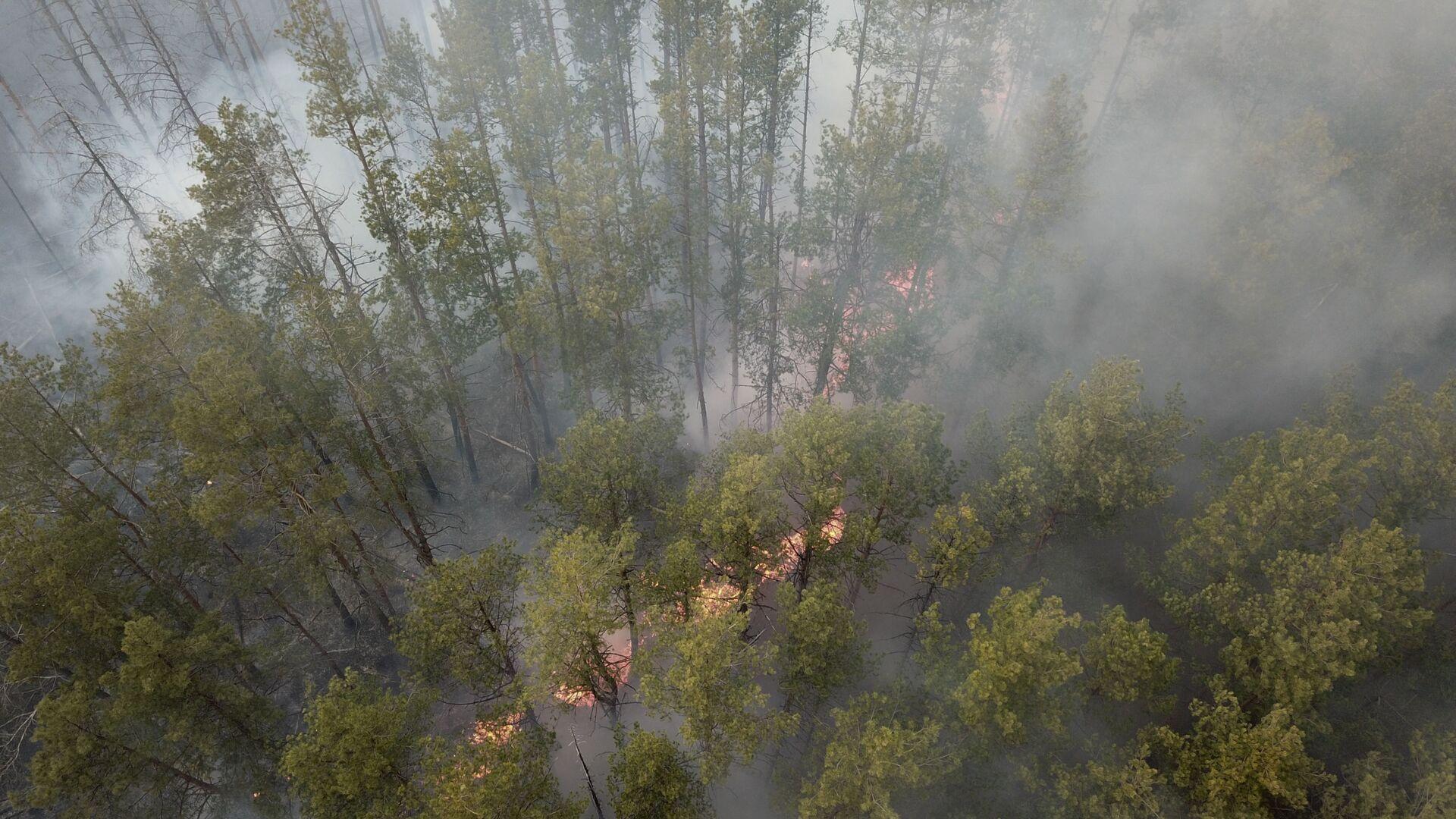 Лесной пожар - Sputnik Латвия, 1920, 11.07.2021