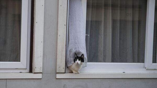 Кошка в окне жилого дома в Париже, Франция - Sputnik Латвия