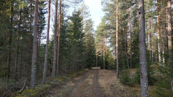 На первом повороте в лес обнаружить памятник не удалось - Sputnik Latvija
